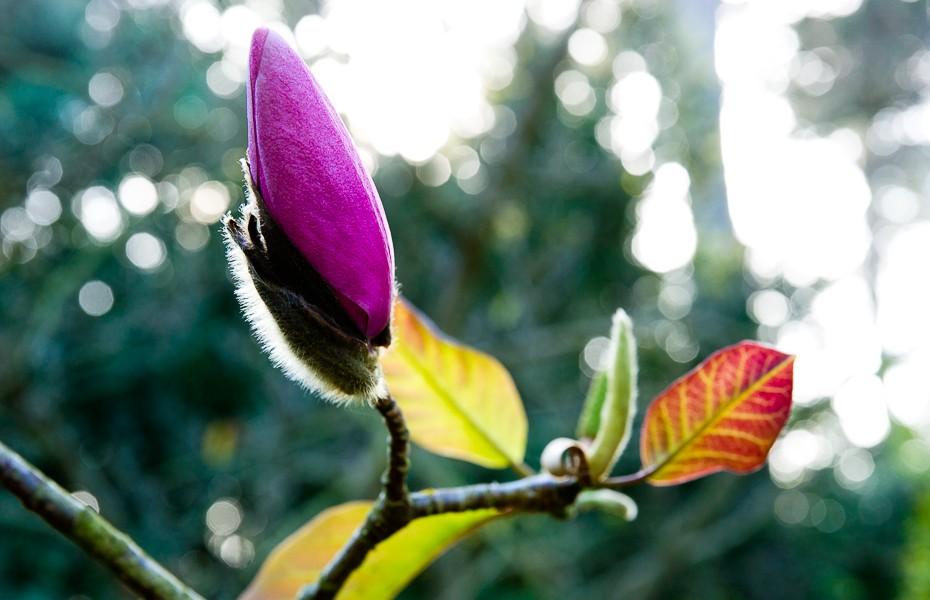 32 magnolia botanical garden san francisco california spring