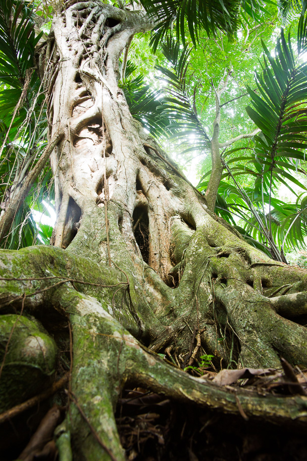 coco de mer jungle vallee de mai praslin seychelles