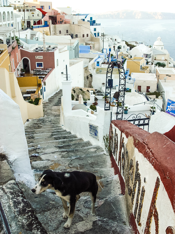 dog stray santorini greece street narrow