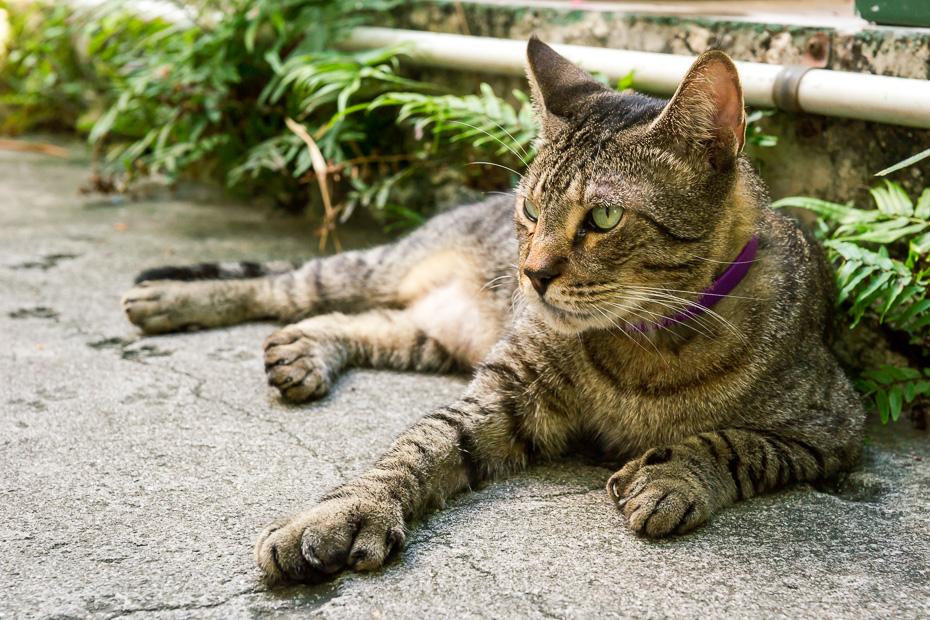 florida keys key west hemingway museum house cat polidactyl usa roadtrip