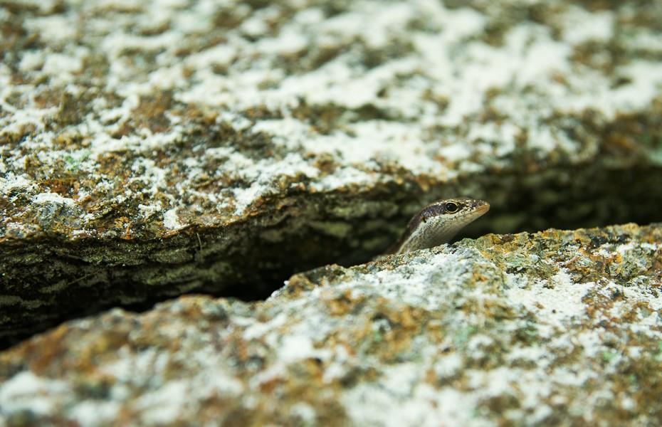 lizard gecko seychelles silhouette