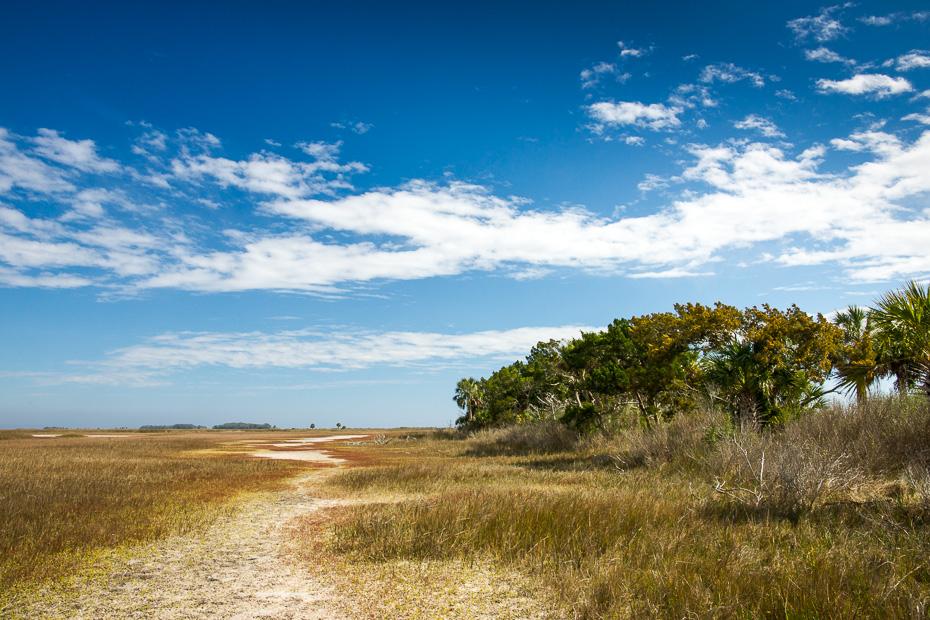 st marks wildlife refuge america usa florida birds