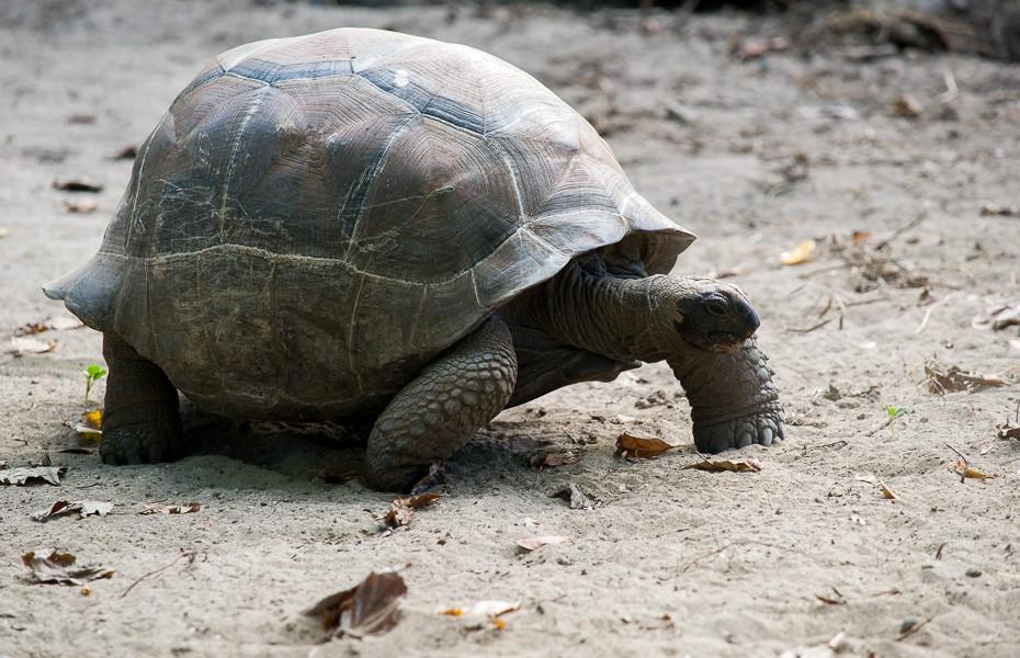 turtle silhouette la digue seychelles