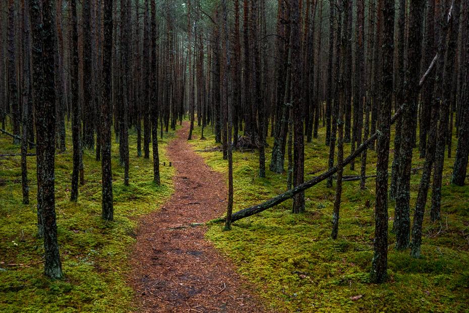 carnikava latvia forest