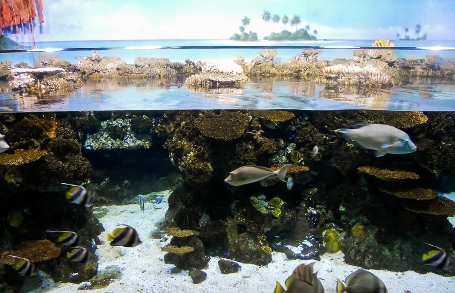 aquarium tropical fish barcelona
