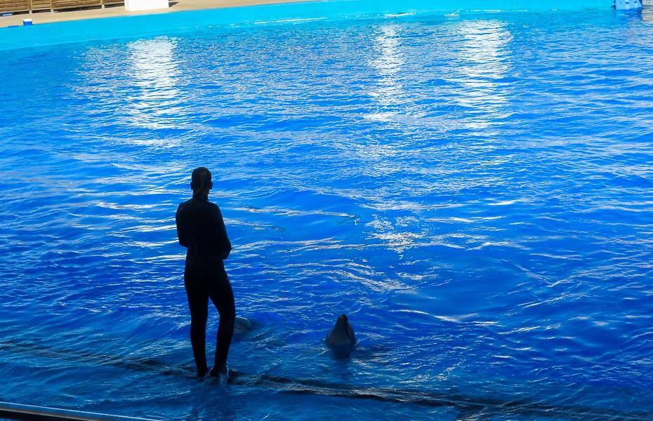 dolphin show valencia aquarium