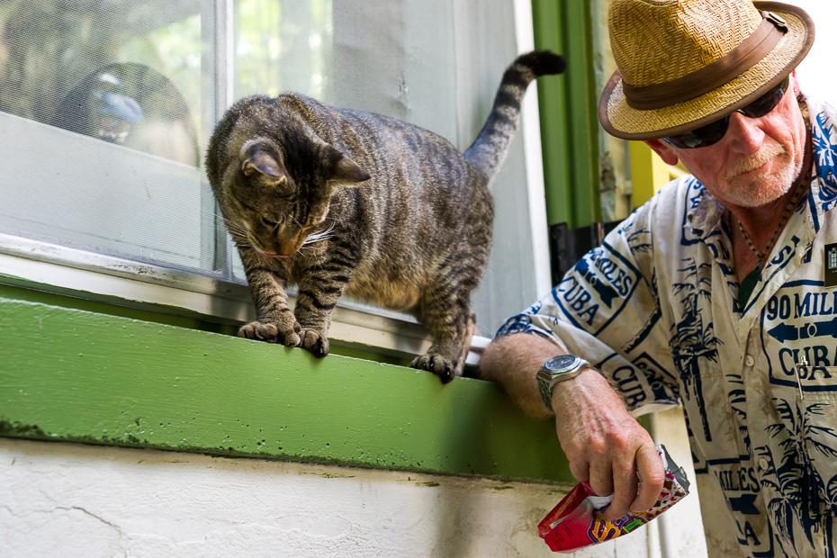 cuba florida keys hemingway west polydactyl cat havana