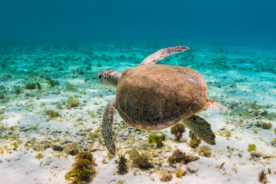 turtle kleine curacao snorkelling day trip