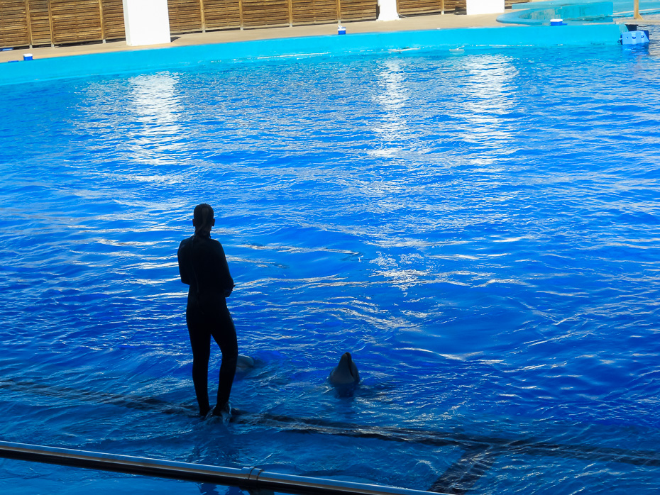 dolphins valencia spain aquarium