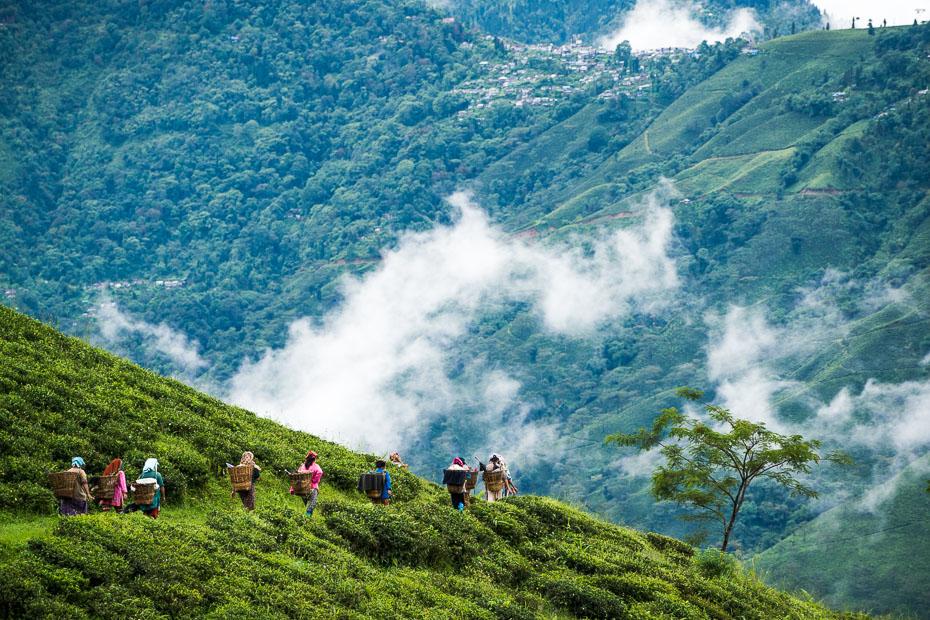 darjeeling india tea plantations jekabs andrushaitis photography riga photo show travel himalaya mountains