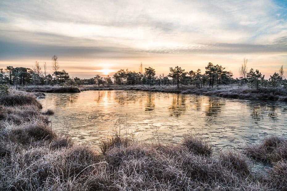 frost jekabs andrusaitis kemeri bog trail footpath latvia