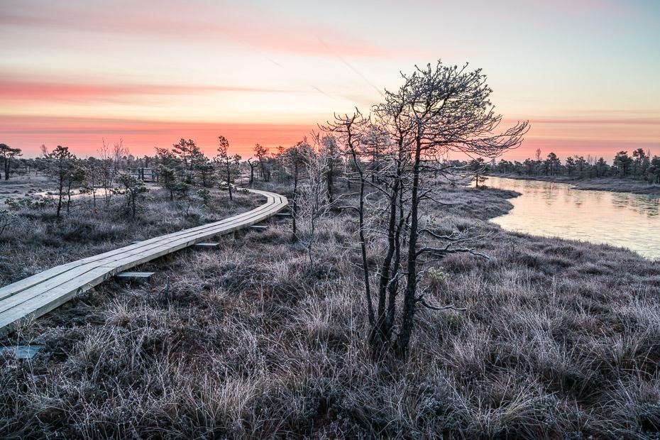 kemeri bog jekabs andrusaitis latvia frost winter