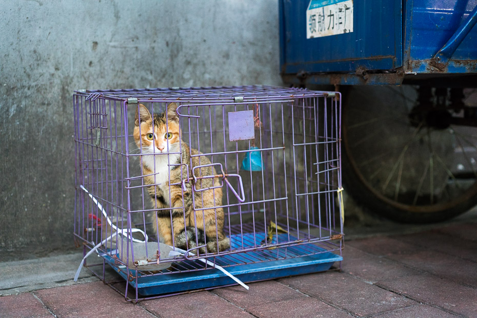 cat crate chinese traditional market