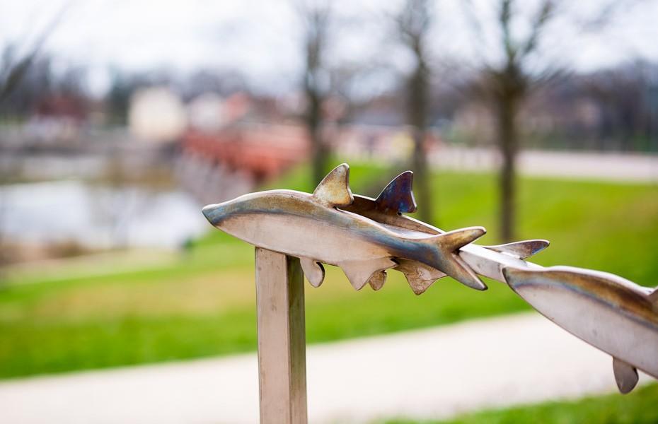 flying fish kuldiga parking