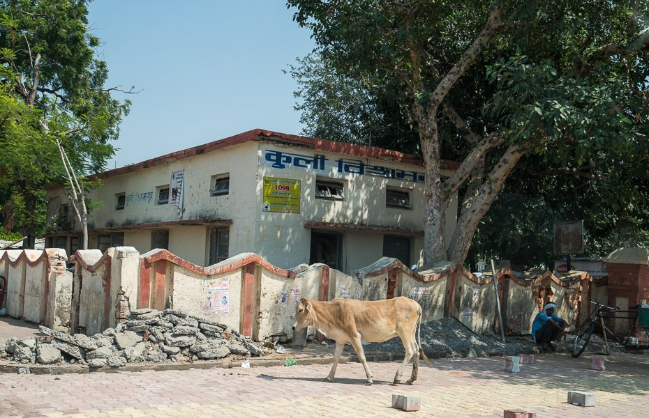 holy cow india homeless