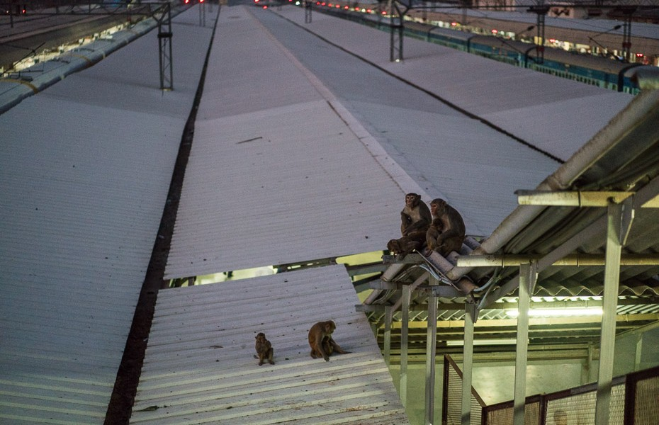 india monkey railway station