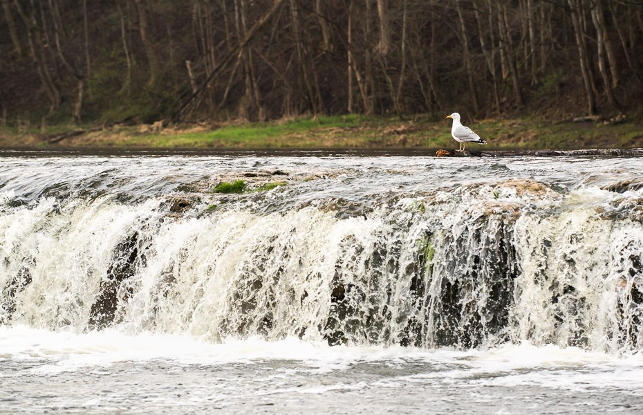 venta waterfall latvia