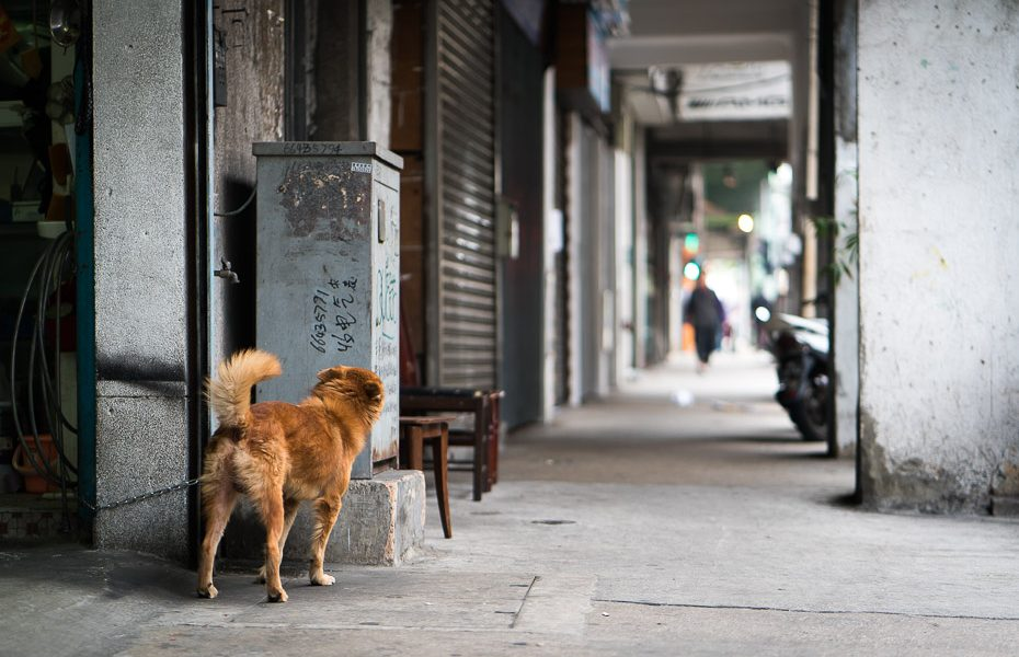 a dog in the streets of macau