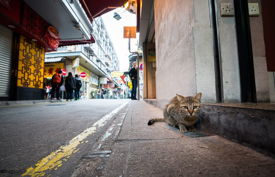 cats in the streets of macao