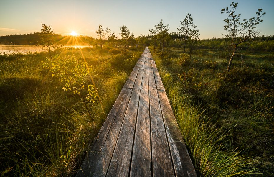 bog path in sunrise