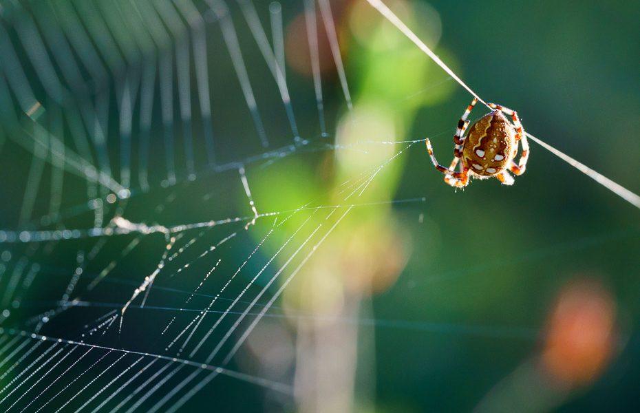 spider at tirumnieki bog path