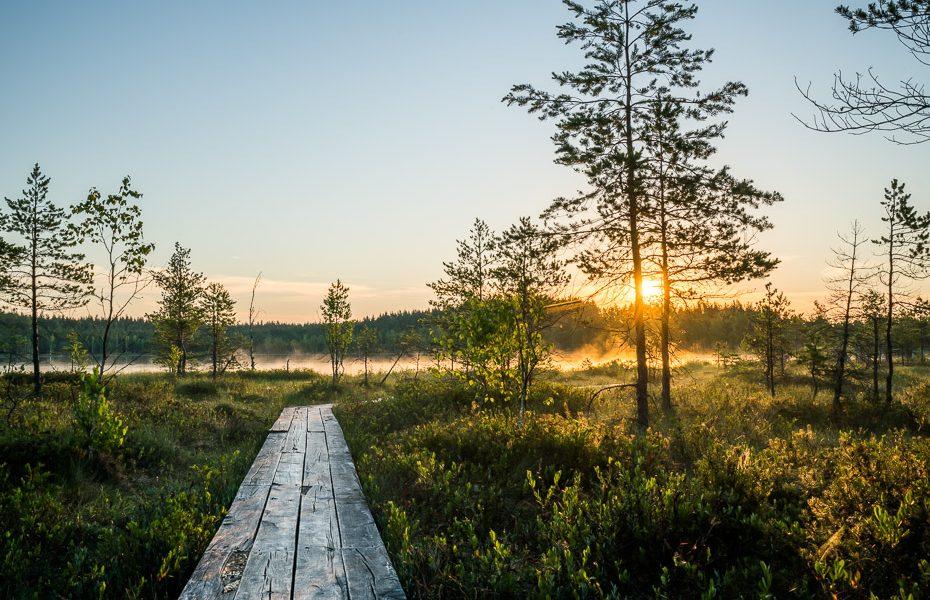 sunrise in tirumnieki bog path