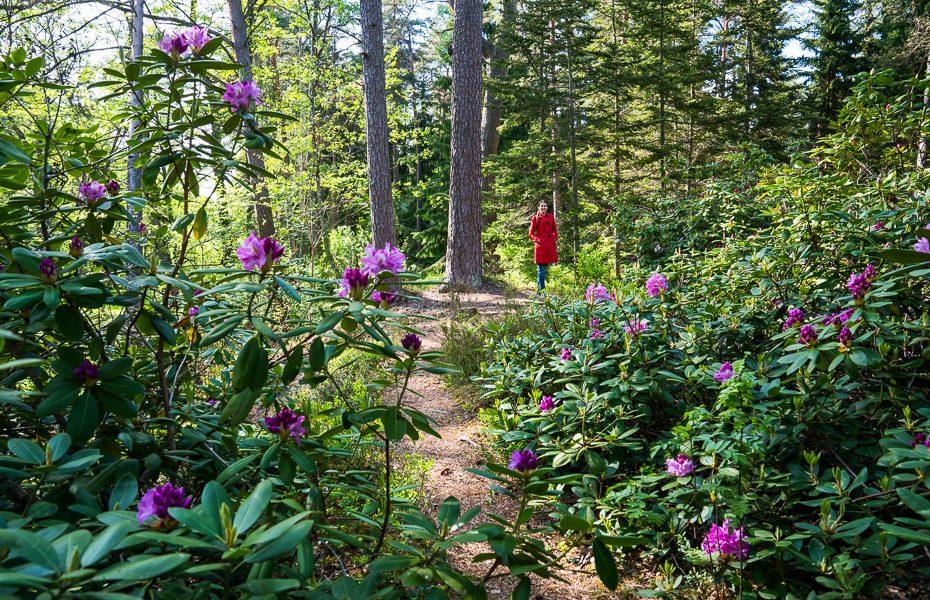 alina andrusaite arboretum