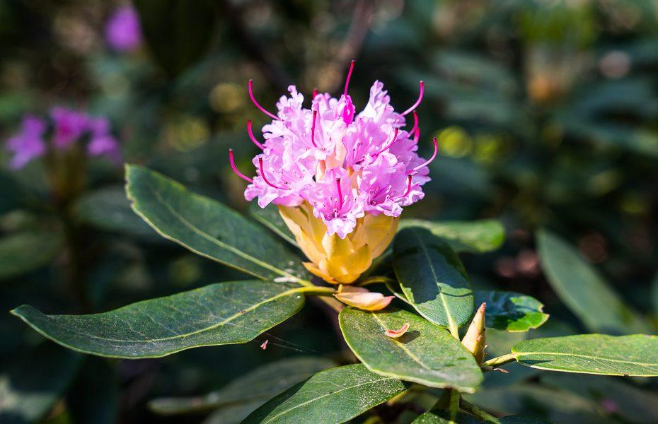 blooming arboretum
