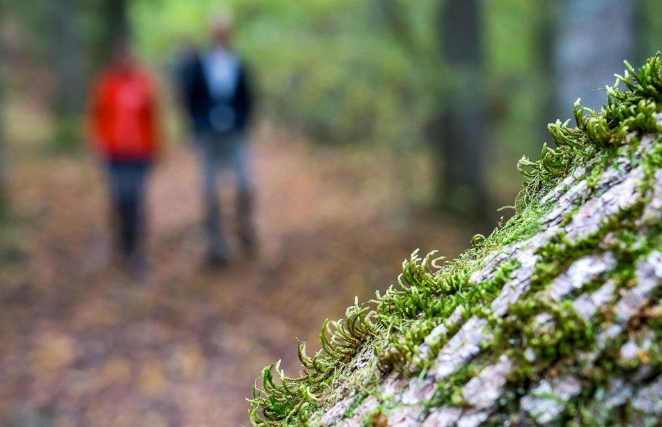 vikmeste nature trail sigulda krimulda
