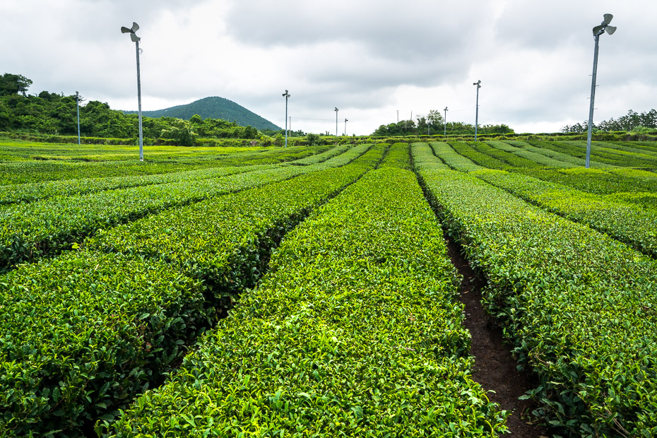 Growing plantations