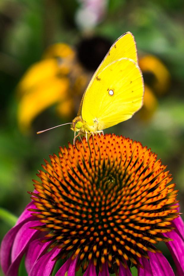 Korean flora and fauna