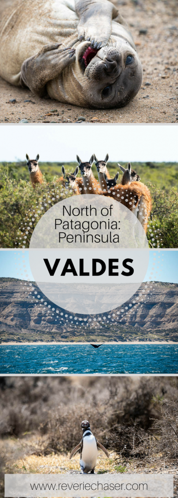 All you need to know about exploring peninsula valdes in patagonia