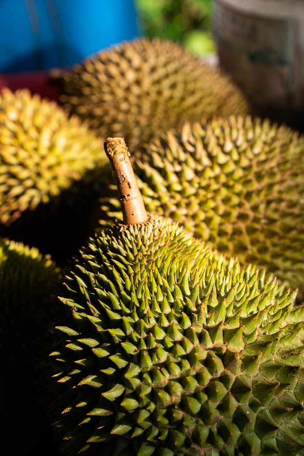 durian tasting tour in singapore