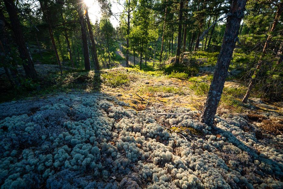 Virvik nature trail