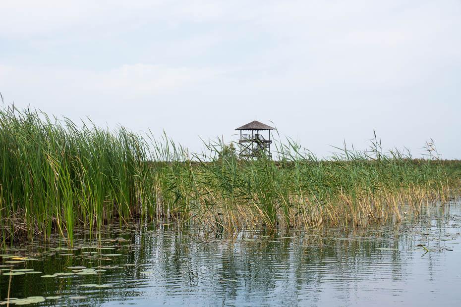Seda bog watchtower