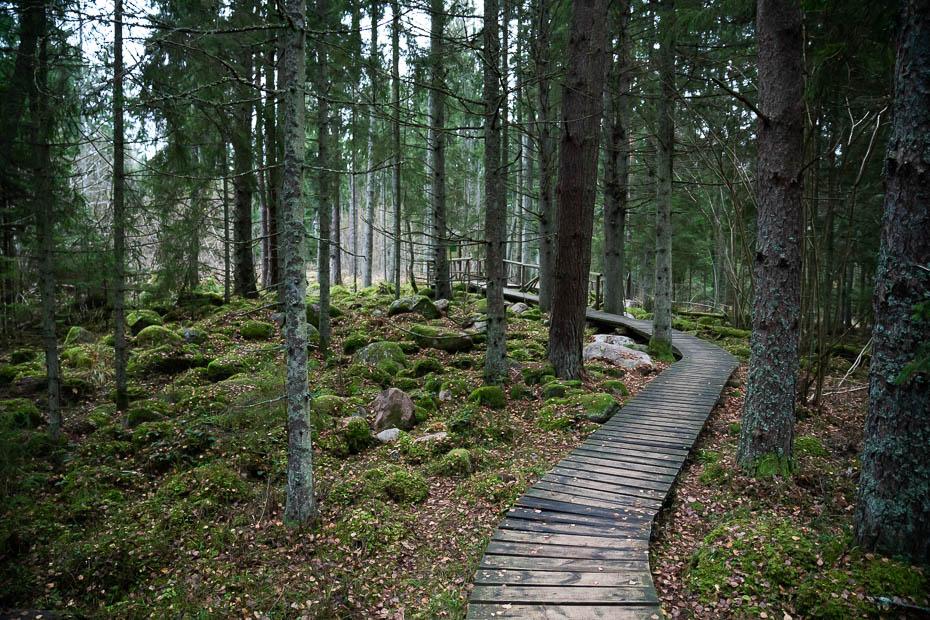 Kaltenes kalvas trail