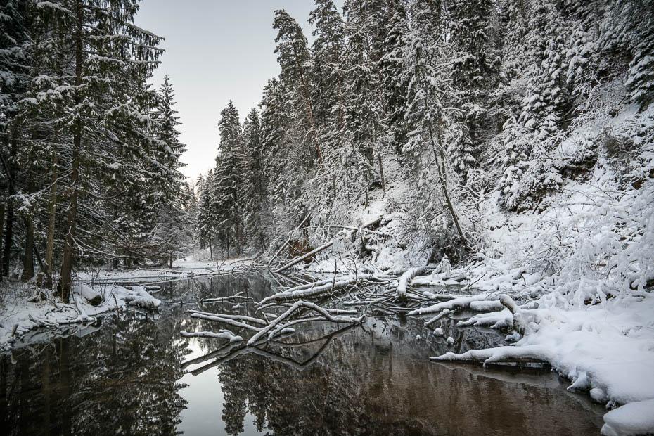 Cirulisu nature trails in winter