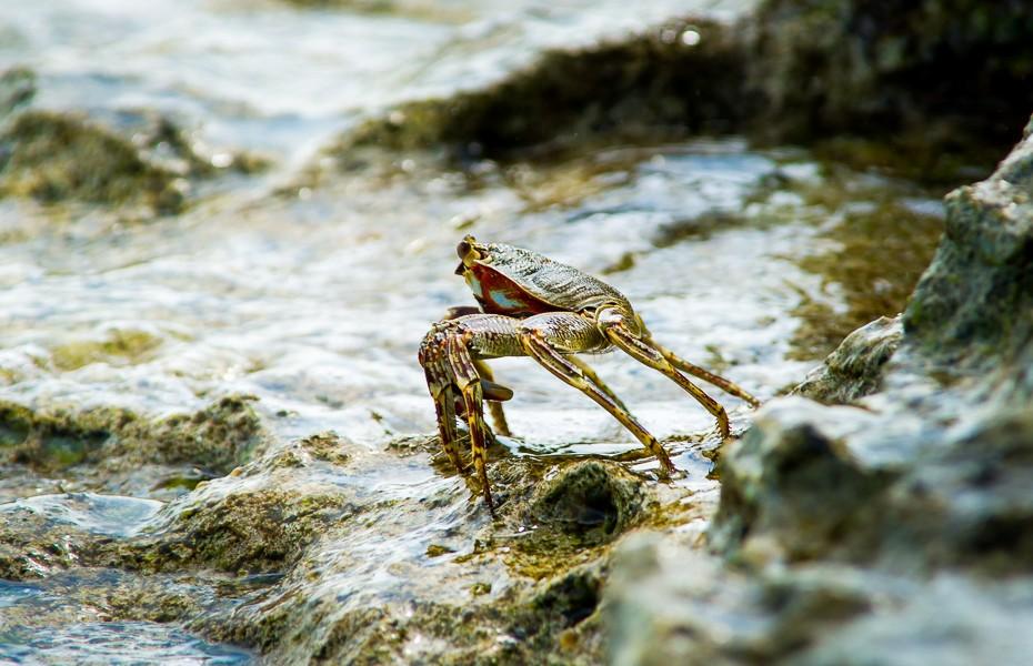 underwater crab beach maldives