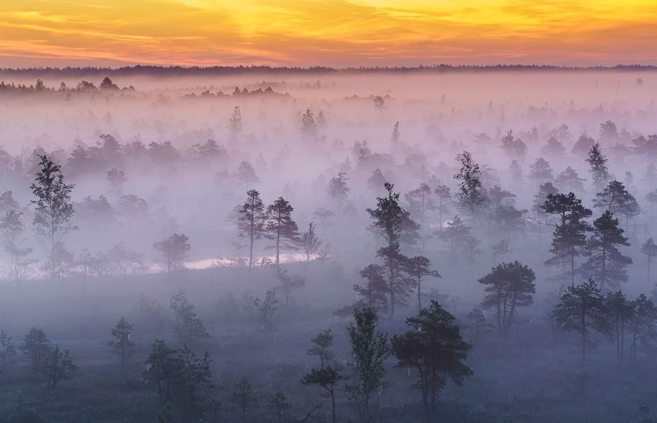 magical morning kemeri bog swamp national park europe latvia footbridge