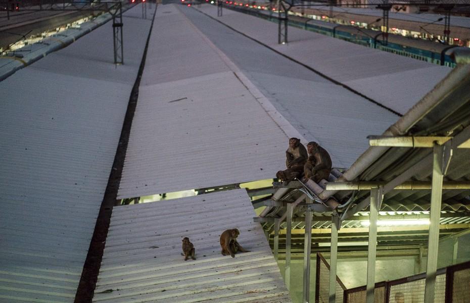 india monkey railway station