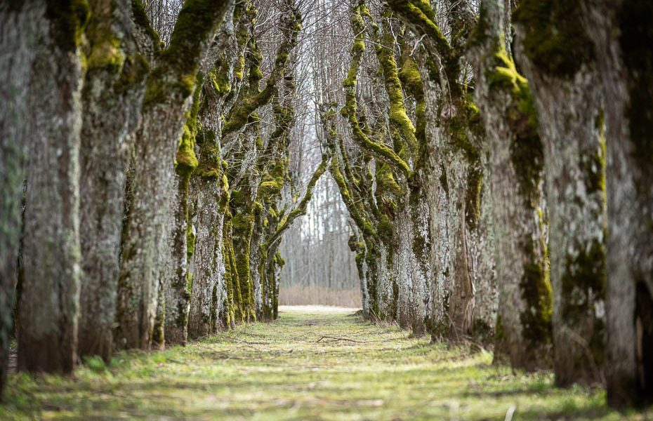 10 nature trails & paths to see in Latvia